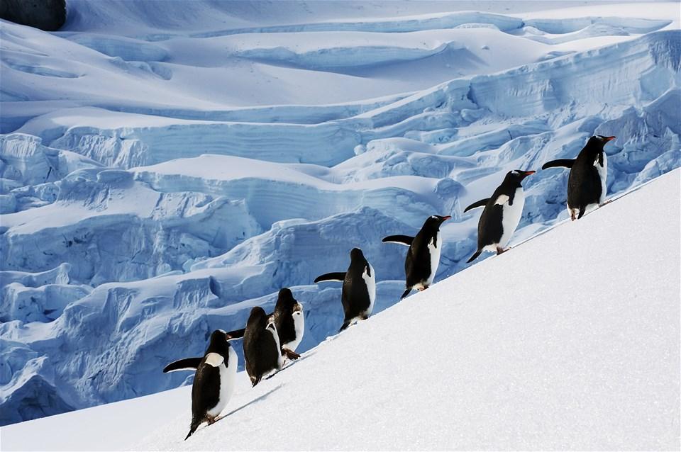 Antarctica Explorer