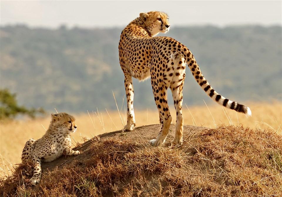 East Africa Explorer