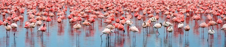Safaris and Safari Holidays
