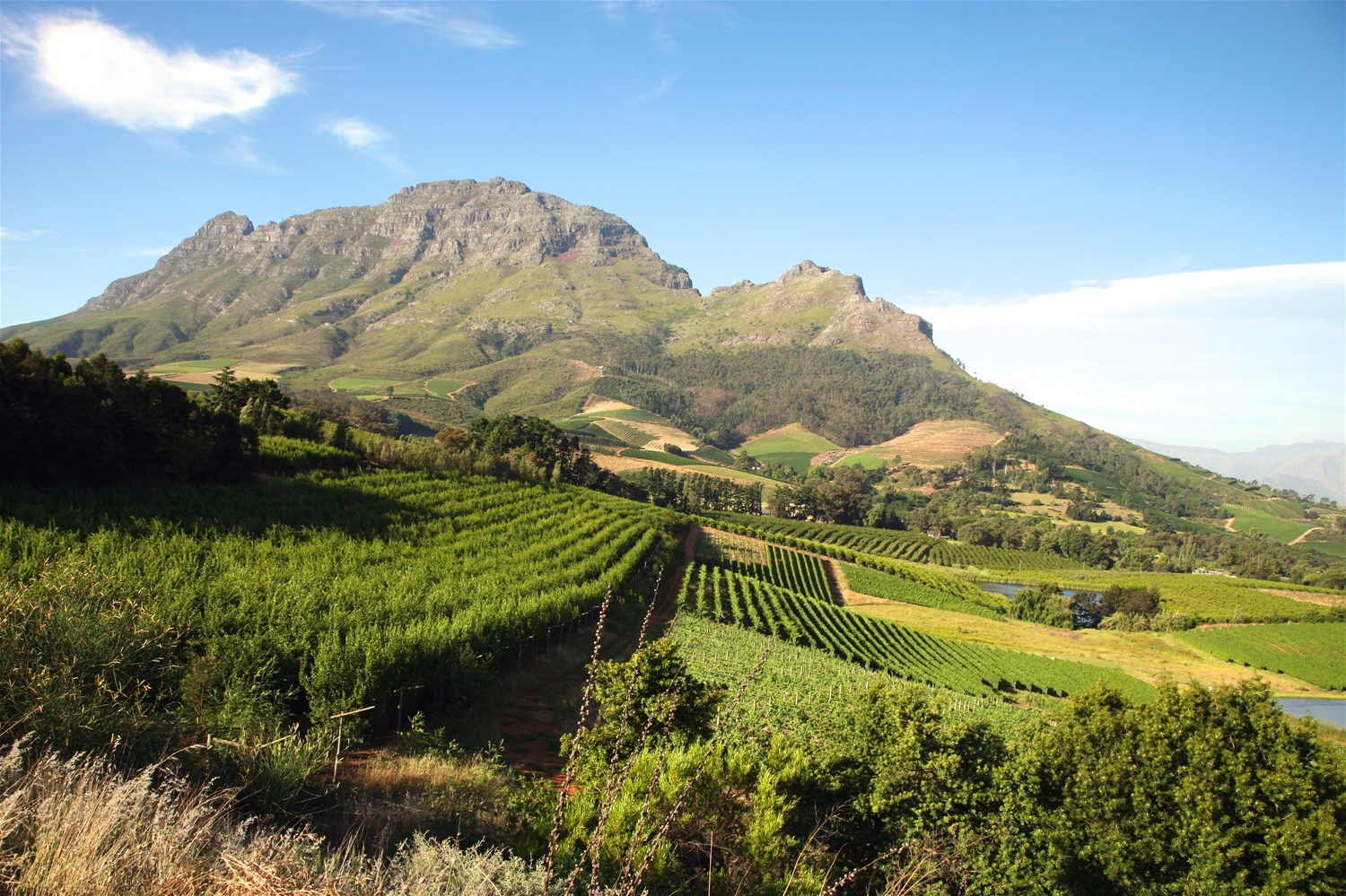 Savour South Africa