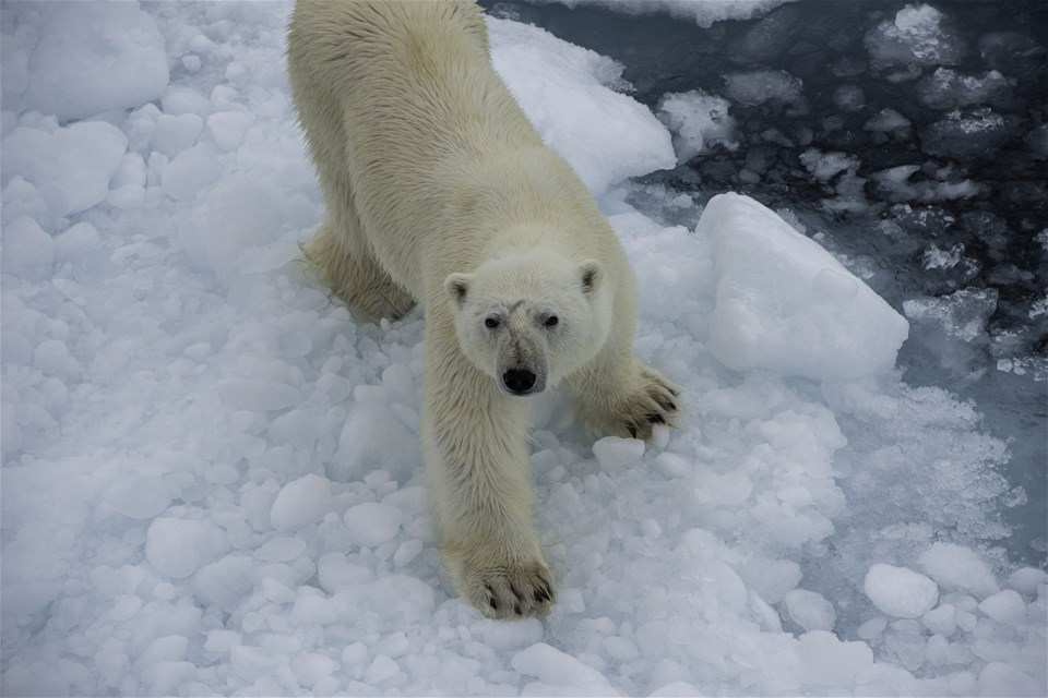Talk to a Trailfinders Polar Expert