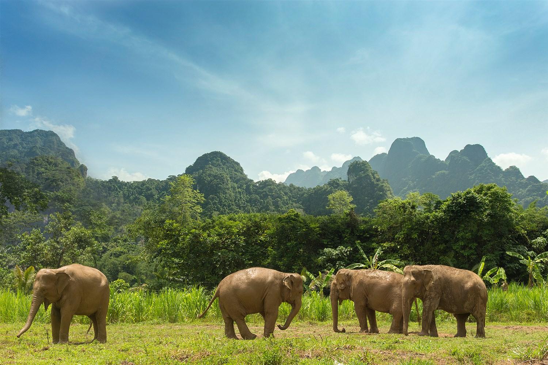 Elephant Hills Tented Camp Khao Sok National Park Khao
