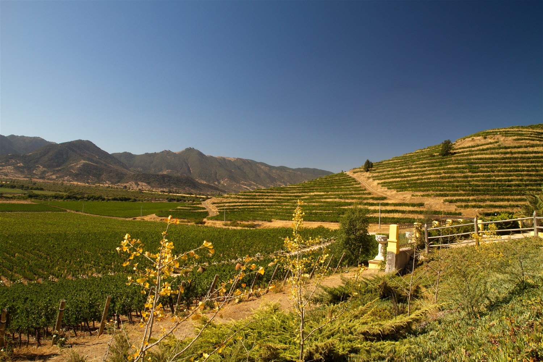 Vineyards & Winelands