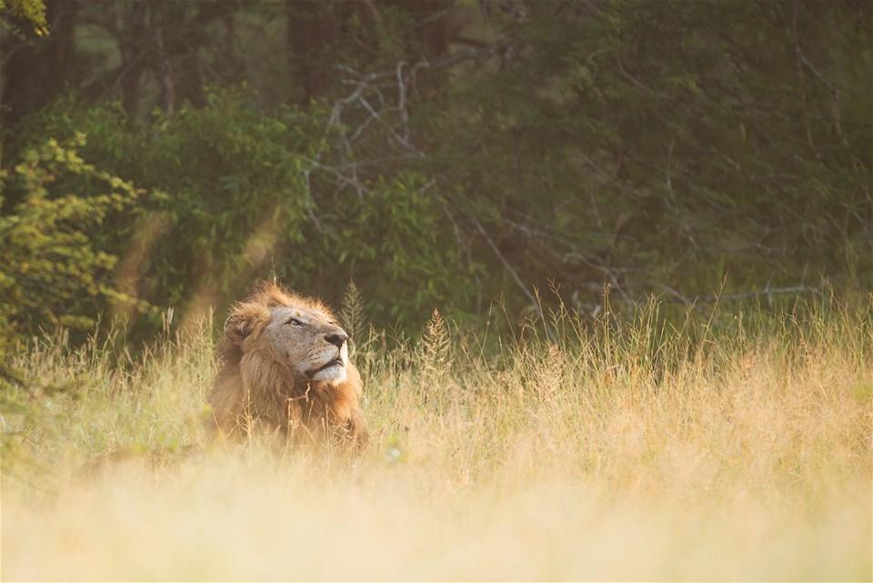 Ol Tukai Lodge | Trailfinders