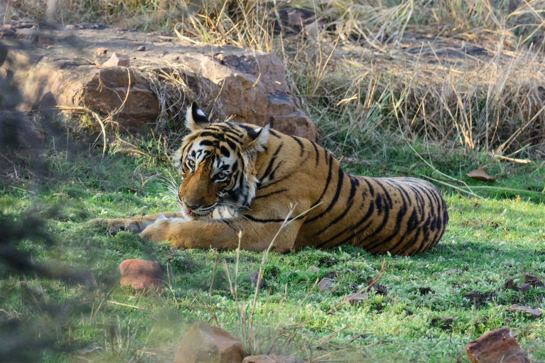 Tadoba-Andhari Tiger Reserve