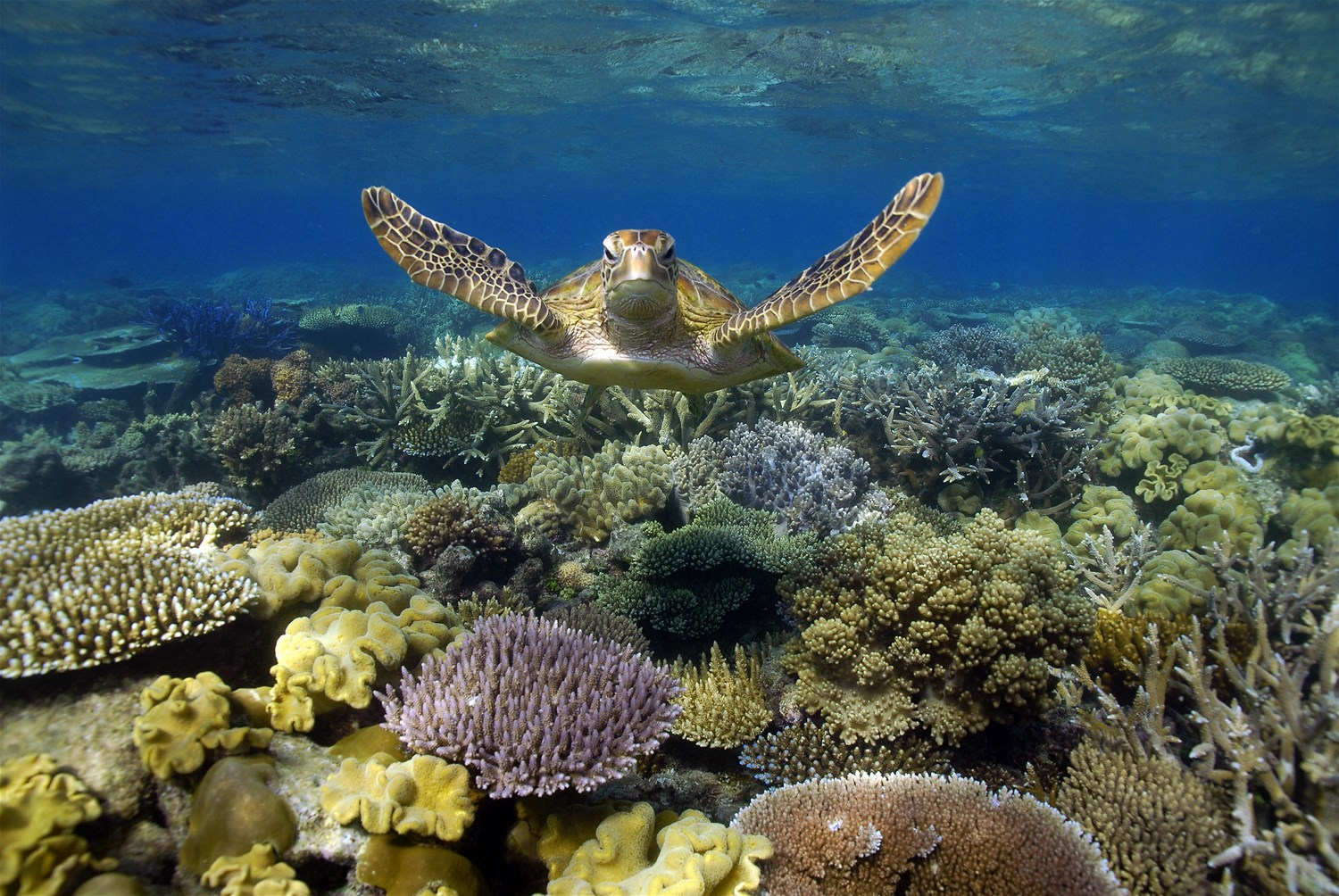 Southern Islands of the Great Barrier Reef