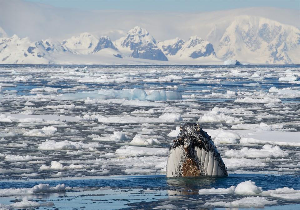 Antarctica in Pure Luxury