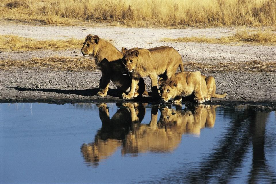 Beautiful Botswana & Victoria Falls