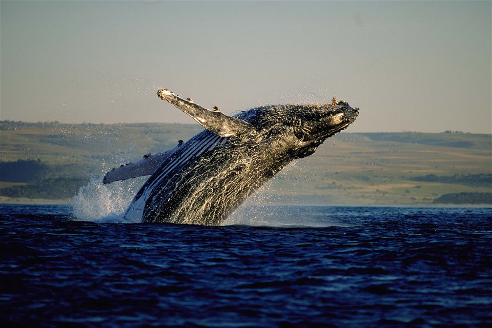Cape Town, Wine, Game & Whales