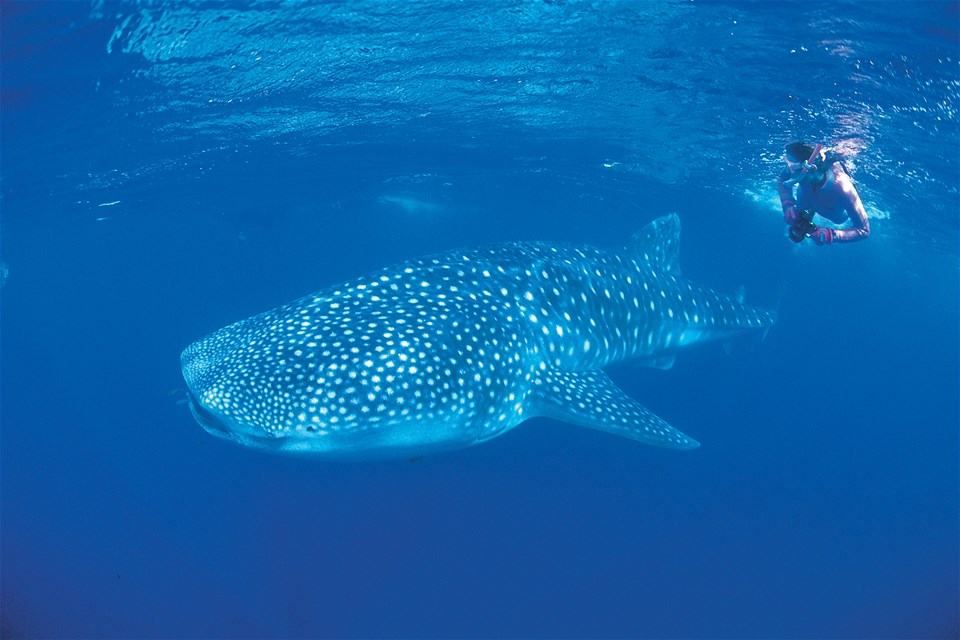 Western Shores & Whale Sharks