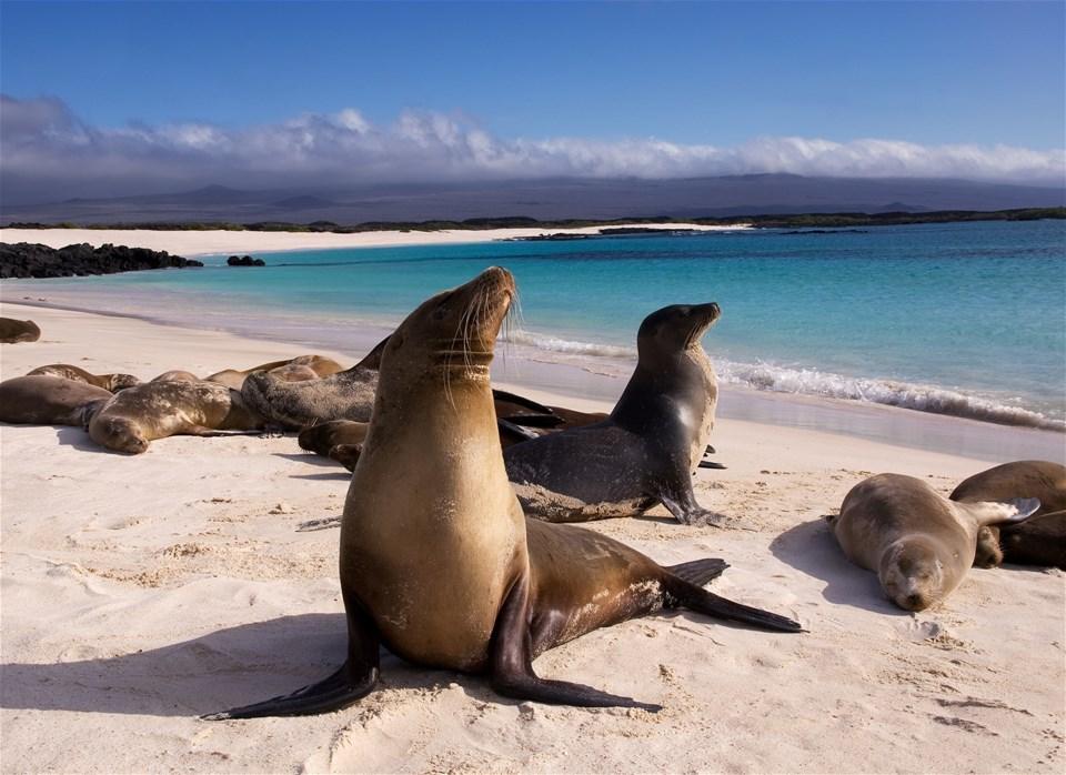 Boutique Galápagos