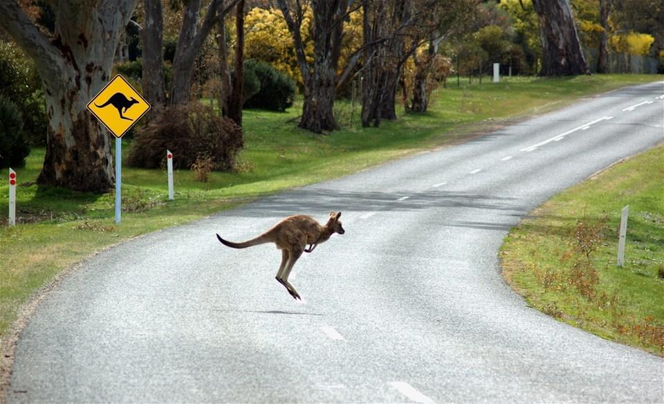 Melbourne - Jump into Australia