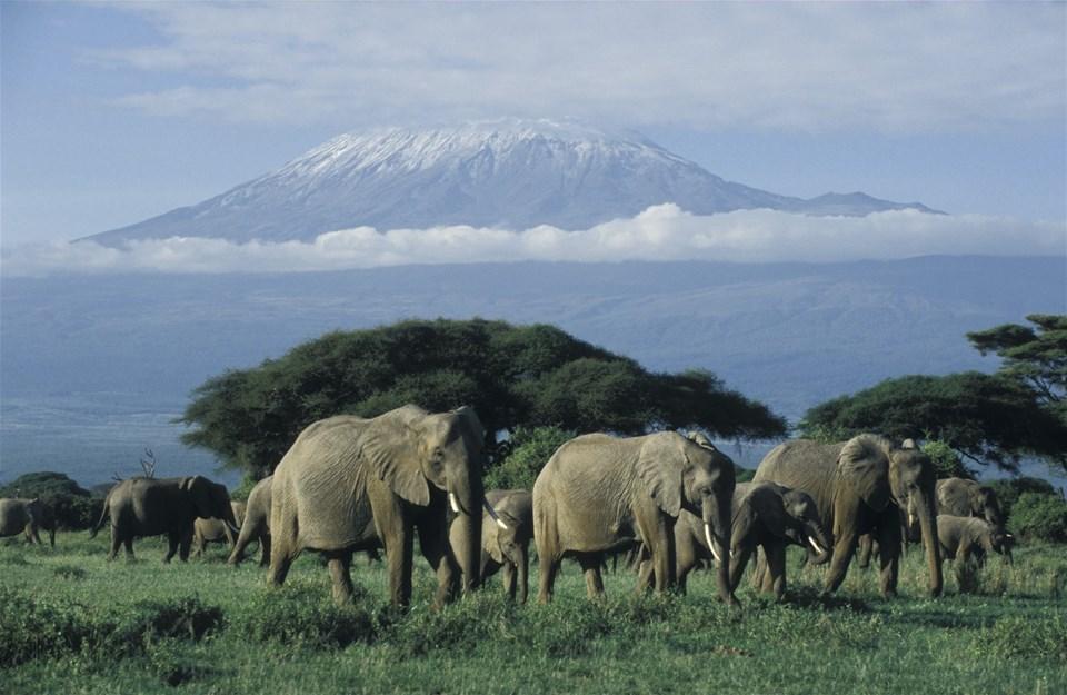 A Kenyan Odyssey