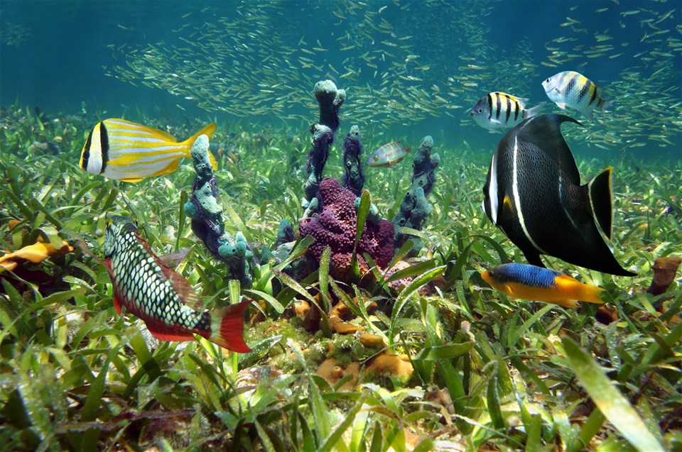 Make A Splash! – The World's Best Marine Life Viewing Opportunities
