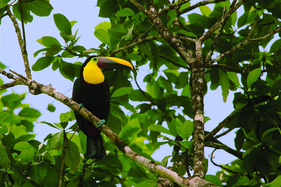 Classic Costa Rica - Intrepid