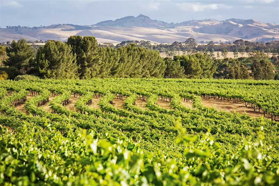 hotels in barossa valley & fleurieu peninsula