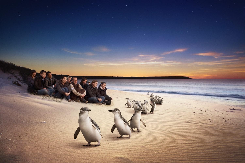 Australia's Phillip Island - Naturally Beautiful
